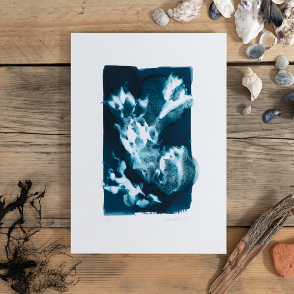 a seaweed cyanotype print laying on a wooden table surrounded by shells and other beach finds